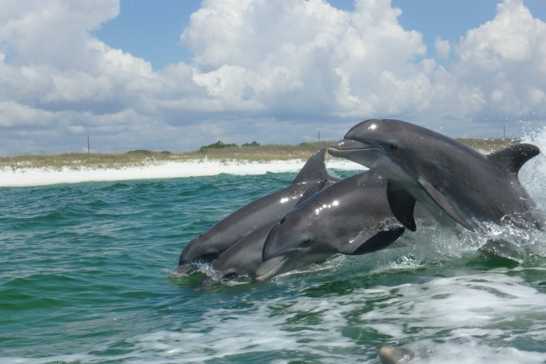 Dolphin Excursion