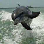 Dolphin Cruises on Pontoon