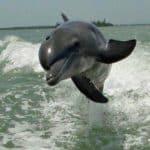 Dolphin Cruises on Pontoon